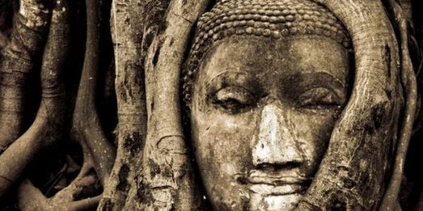 Arbol Buda