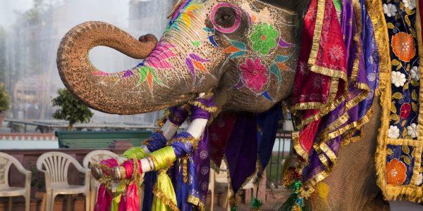 Elefantes pintados