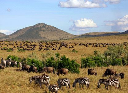 masai-mara-kenya-africa-4-496