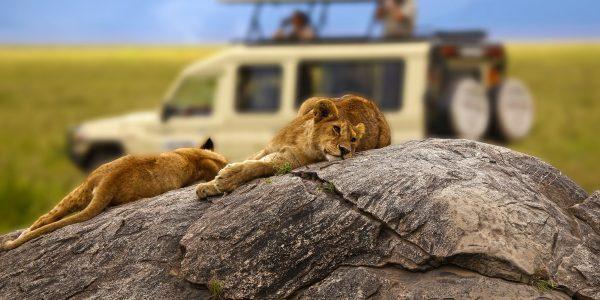 tanzania-safari-
